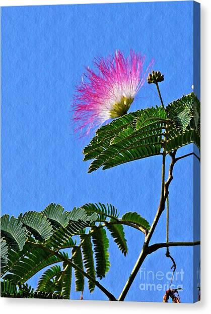 Mimosa Canvas Print - Mimosa by Sarah Loft
