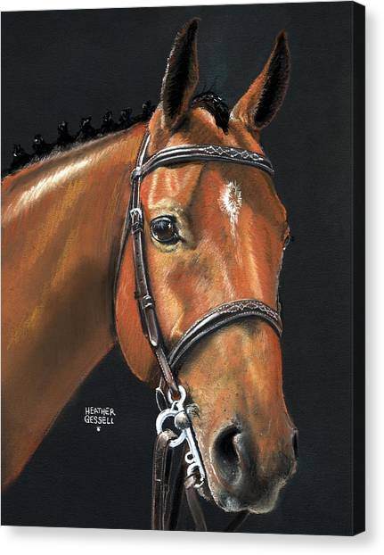 Horse Bridle Canvas Print - Miner - Bay Horse Portrait by Heather Gessell