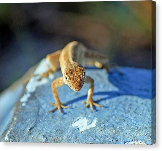 Florida Wildlife Canvas Print - Mini Attitude by Kenneth Albin