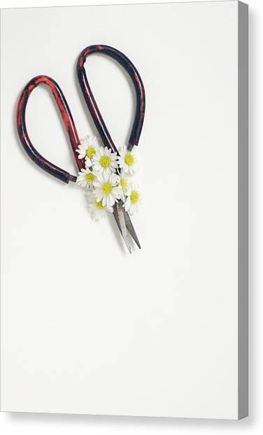 Miniature Daisies And Vintage Scissors Canvas Print