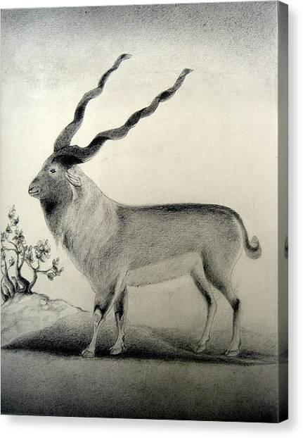 Miniature Drawing Of Oryx Canvas Print by Caroline  Urbania Naeem