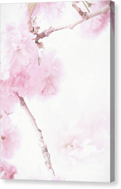 Minimalist Cherry Blossoms Canvas Print