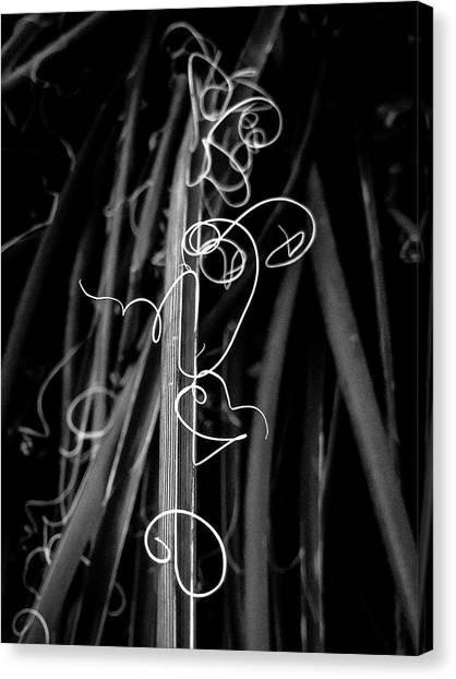 Miro In The Desert Canvas Print