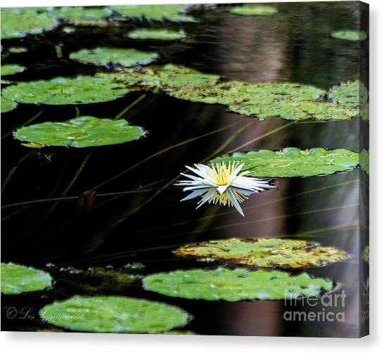 Mirror Lily Canvas Print