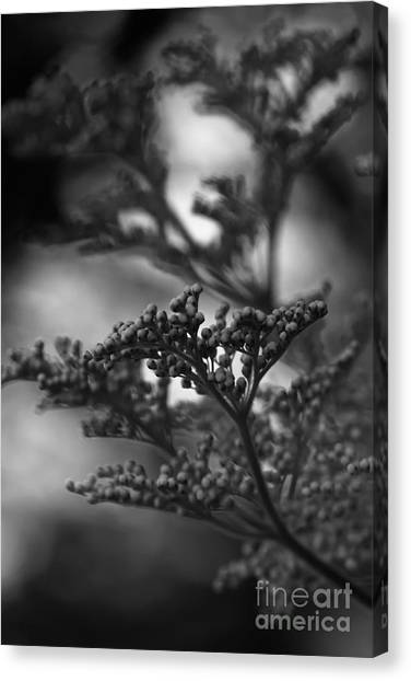 Mirrored In Sterling Canvas Print