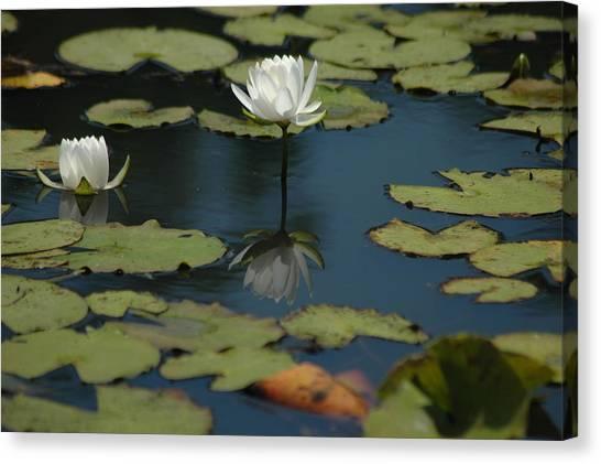 Mirrored Reflections 2 Canvas Print by Devane Mattoni