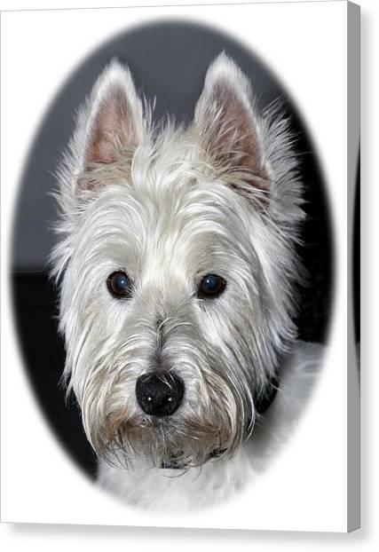 Canvas Print featuring the photograph Mischievous Westie Dog by Bob Slitzan