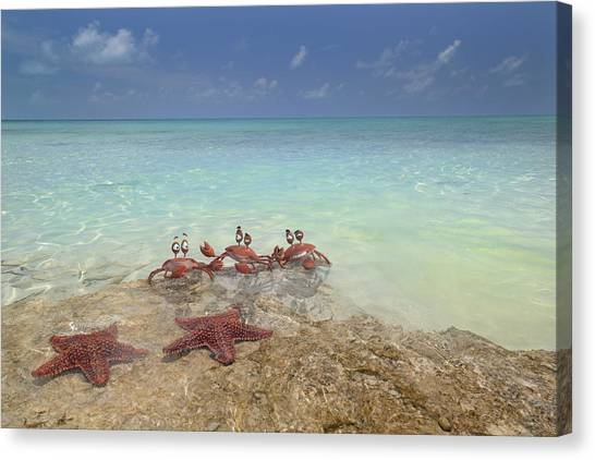 Carribbean Canvas Print - Mischievous Trio by Betsy Knapp
