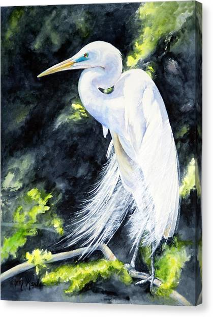Miss April - Great Egret Canvas Print