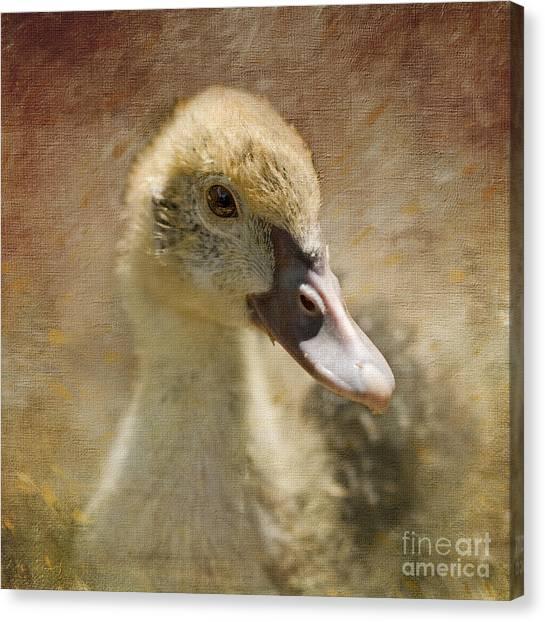 Miss Duck Canvas Print