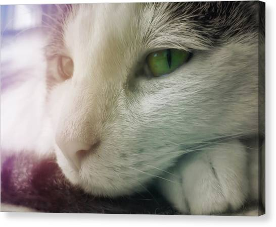 Miss Ginny Canvas Print by JAMART Photography