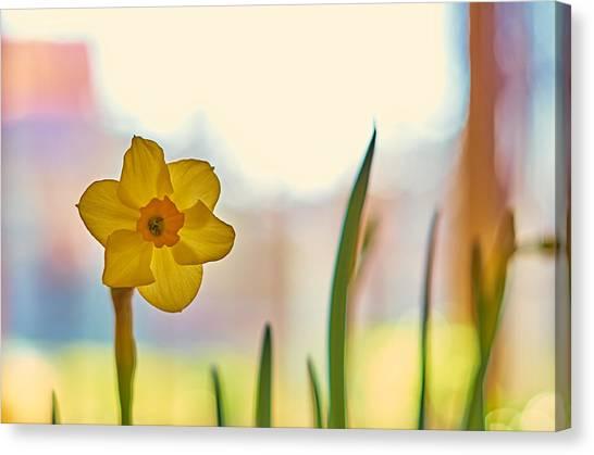 Miss Yellow Canvas Print