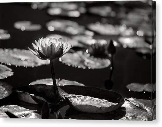Mission Lotus Canvas Print