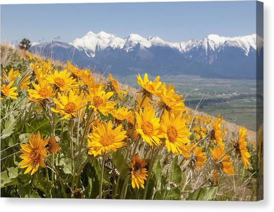 Mission Mountain Balsam Blooms Canvas Print