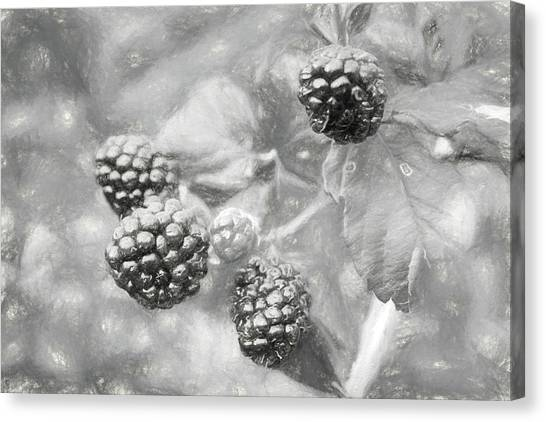 Wild Berries Canvas Print - Mississippi Blackberries In Black And White by JC Findley