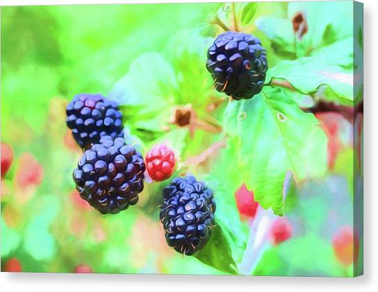 Wild Berries Canvas Print - Mississippi Blackberries by JC Findley