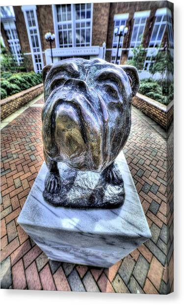 Mississippi State University Canvas Print - Mississippi State Bulldog by JC Findley