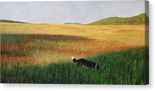 Missy In The Field Canvas Print by Allan OMarra