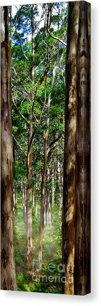 The Trees Canvas Print - Mist In The Forest by Az Jackson