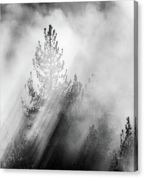 Mist Shadows Canvas Print