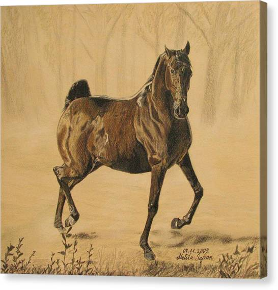 Mistical Horse Canvas Print
