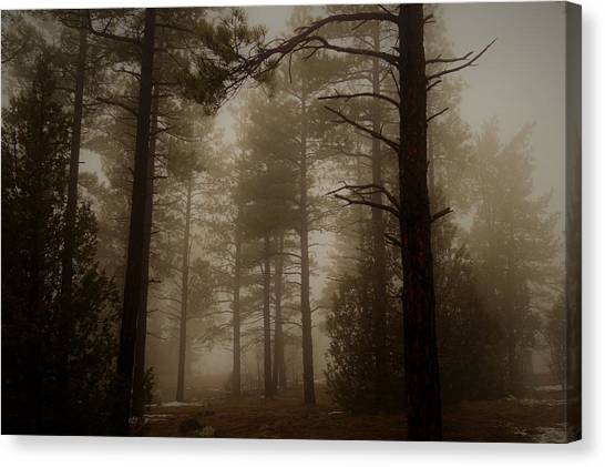 Misty Forest Morning Canvas Print