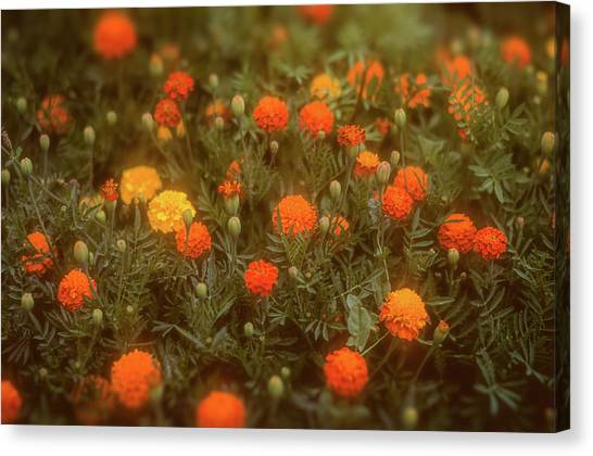 Canvas Print featuring the photograph Misty Marigolds by John Brink