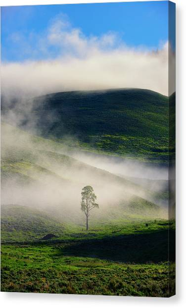 Canvas Print featuring the photograph Misty Morning by Greg Norrell