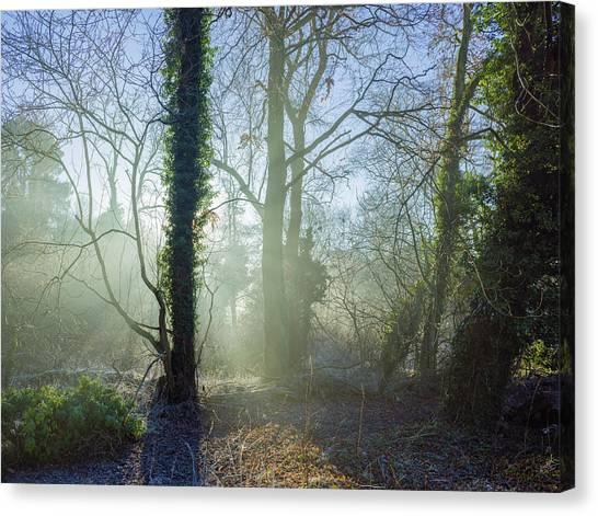 Misty Morning Canvas Print