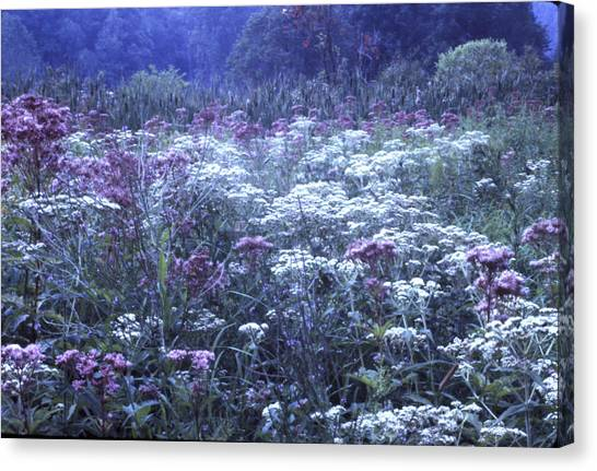 Misty Morning Wildflowers 3 Canvas Print