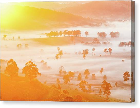 Wine Country Canvas Print - Misty Mornings by Az Jackson