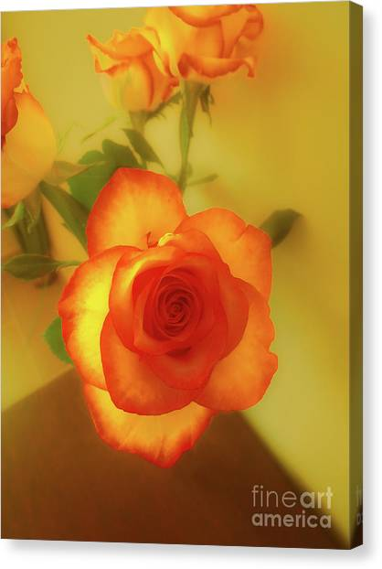 Misty Orange Rose Canvas Print