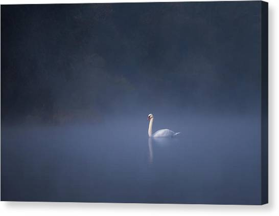 Canvas Print featuring the photograph Misty River Swan by Davor Zerjav