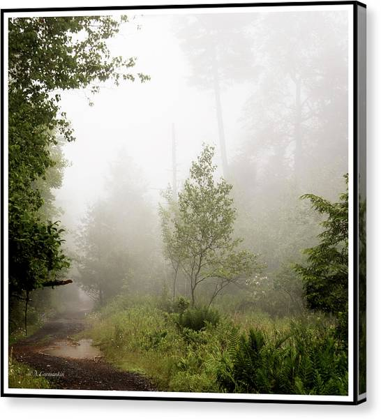 Misty Road At Forest Edge, Pocono Mountains, Pennsylvania Canvas Print