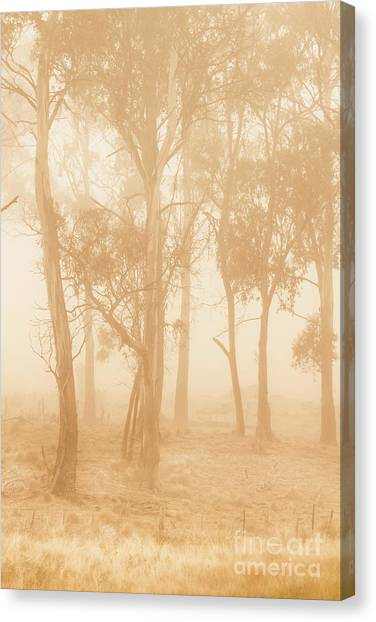 Foggy Forests Canvas Print - Misty Woods by Jorgo Photography - Wall Art Gallery
