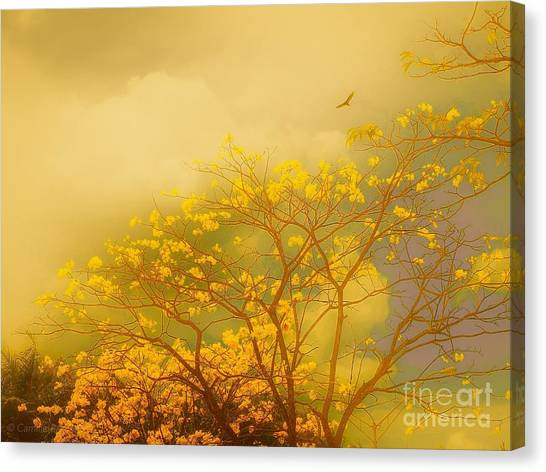 Misty Yellow Hue -poui Canvas Print
