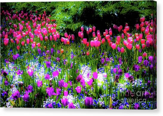 Mixed Flowers With Tulips Canvas Print by D Davila