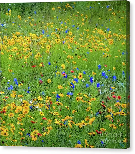 Mixed Wildflowers In Bloom 538 Canvas Print