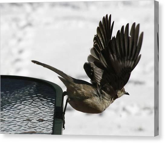Mockingbirds Canvas Print - Mockingbird Departure by Christopher Kirby