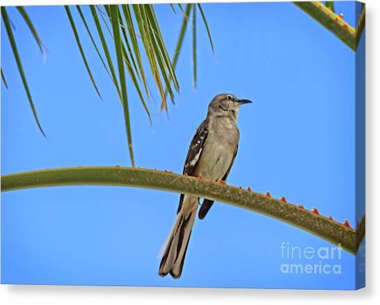 Mockingbirds Canvas Print - Mockingbird In A Palm Tree by Robert Bales