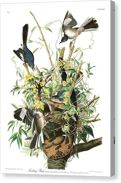 Mockingbirds Canvas Print - Mockingbird by John James Audubon