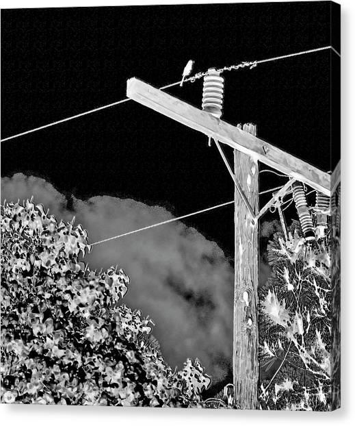 Mockingbird On A Wire Canvas Print
