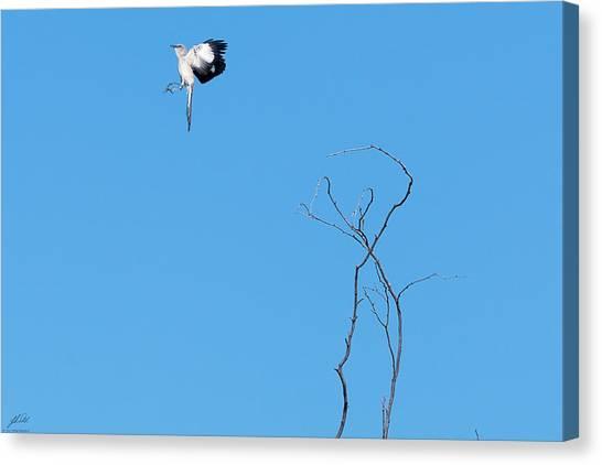 Mockingbird Up Canvas Print