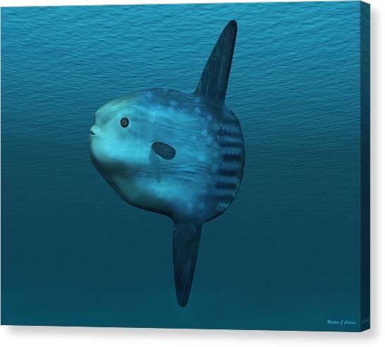 Mola Mola Ocean Sunfish Canvas Print