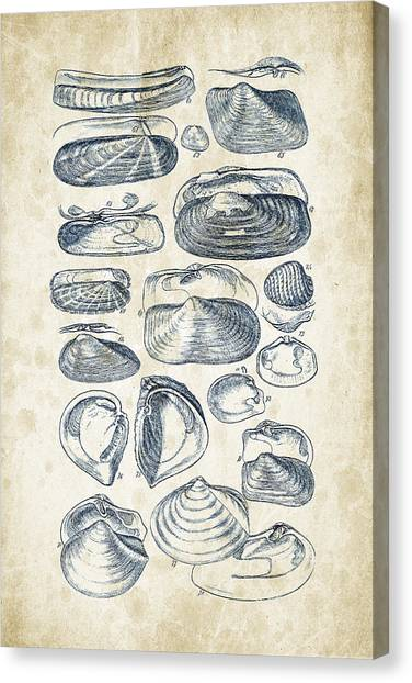 Clams Canvas Print - Mollusks - 1842 - 03 by Aged Pixel