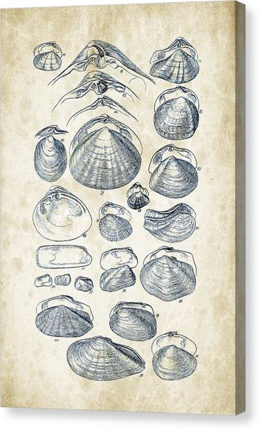 Clams Canvas Print - Mollusks - 1842 - 04 by Aged Pixel