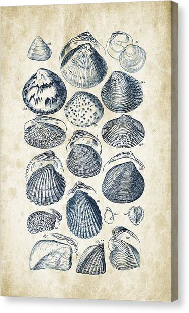 Clams Canvas Print - Mollusks - 1842 - 06 by Aged Pixel
