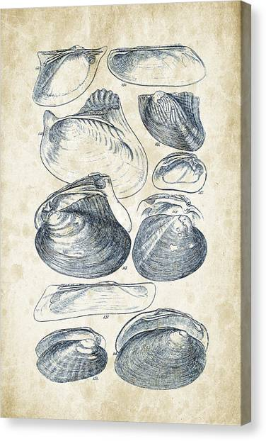 Clams Canvas Print - Mollusks - 1842 - 08 by Aged Pixel