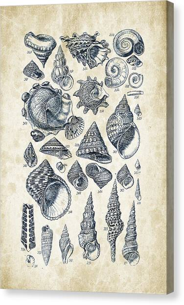 Clams Canvas Print - Mollusks - 1842 - 16 by Aged Pixel