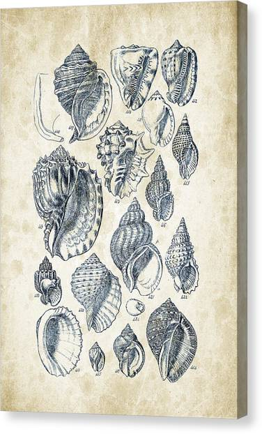Clams Canvas Print - Mollusks - 1842 - 19 by Aged Pixel